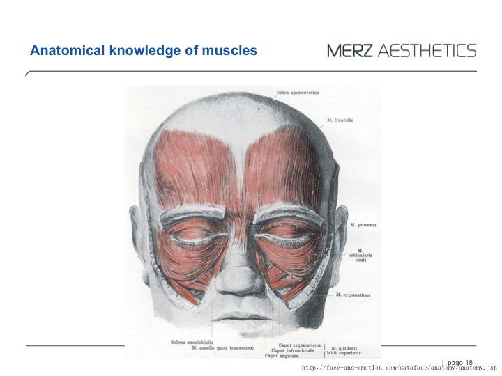 RAD muscle.jpg
